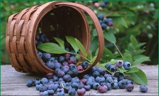 Blueberries and Mixed Berries