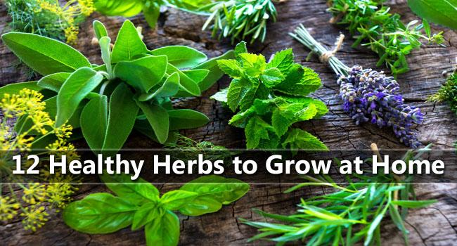 The Best Herbs to Grow and Eat at Home