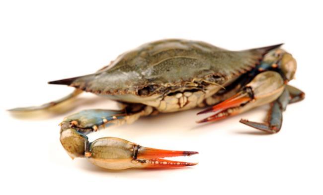 How to Treat Shellfish Allergy