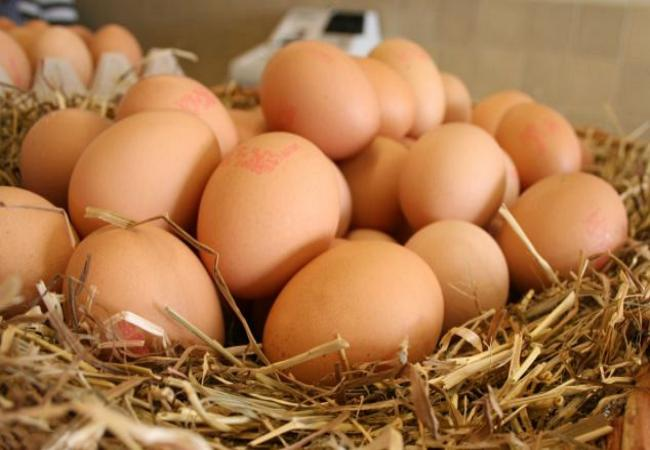 Eggs - Best Energy Source