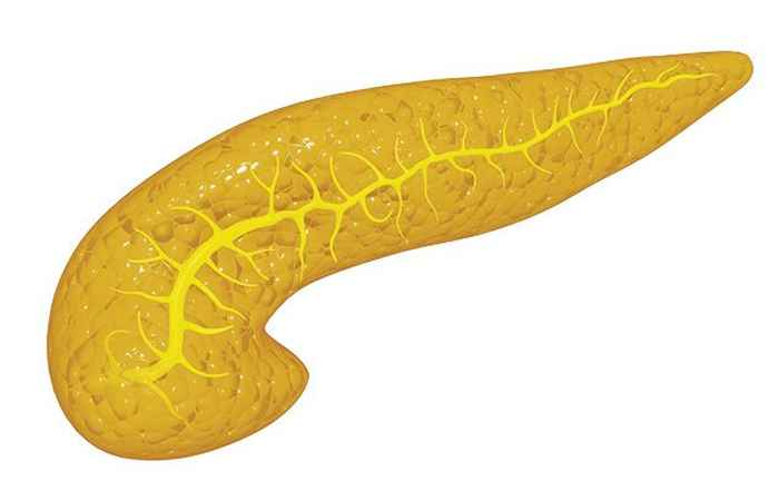 Role of Pancreas in Human Digestive System