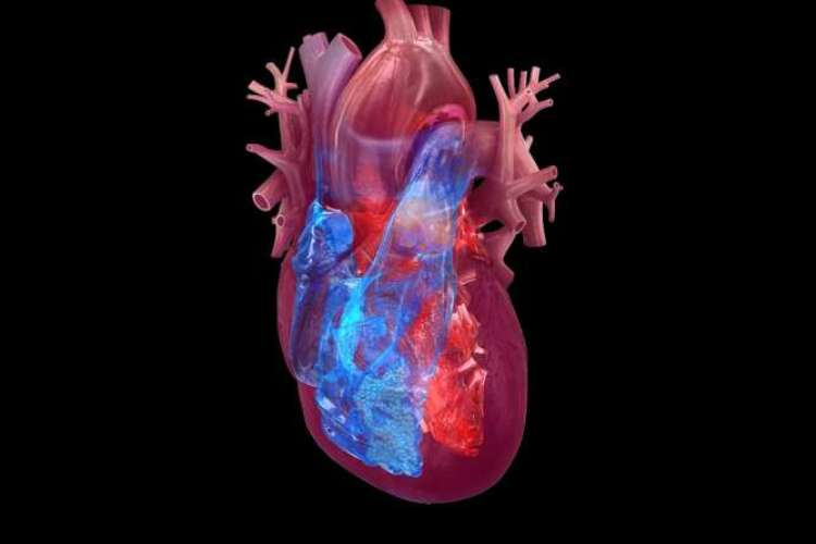 Broken Heart and Cancer Risk
