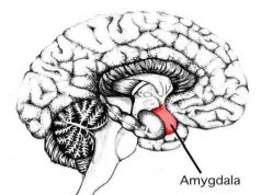 Amygdala Fear Breathing