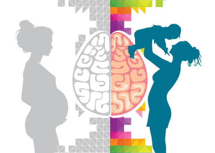 Pregnancy leads to long lasting changes in human brain structure
