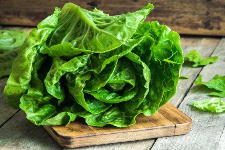 Lettuce can help sleep